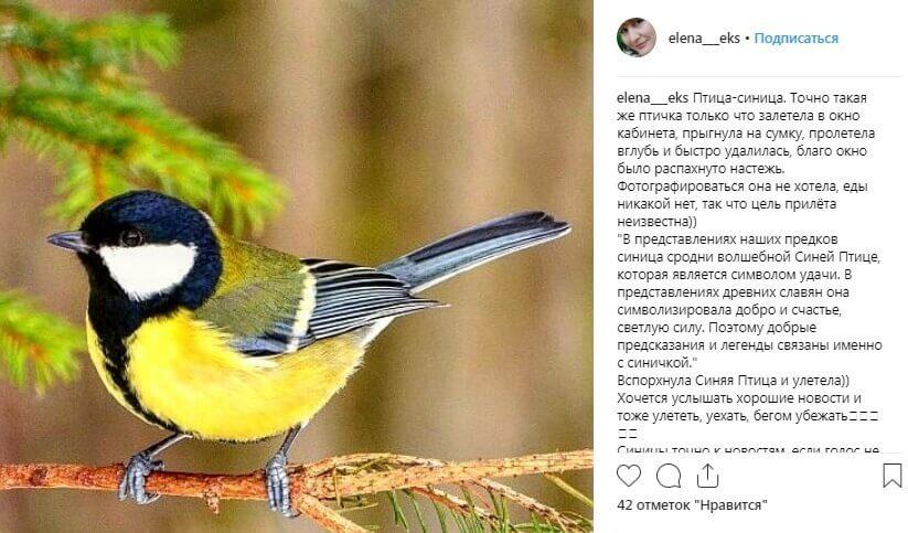 Пост про птицу синицу